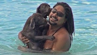 Cute Puppies First Swim!