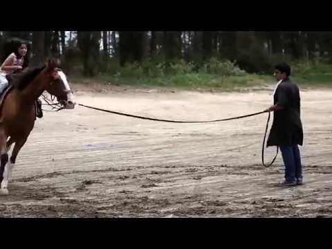 Horse Training Waseem Sabir--O Meri Jaan