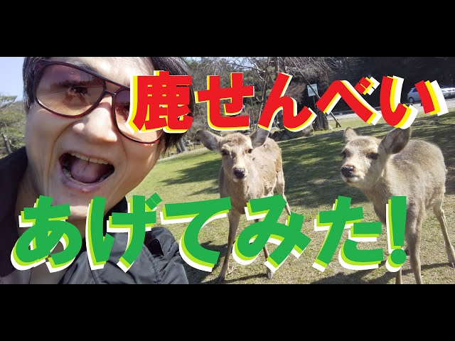 ③/③『奈良公園のシカにもコロナウィルスの影響が及んでいる』とニュースで見たので奈良公園に行ってみた。鹿せんべいを買う編【#2 今話題の場所に行ってみた】