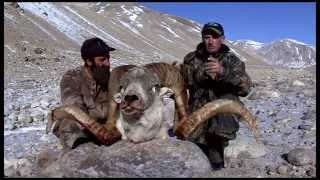 Best Asian Hunting Action Marco Polo & Ibex Hunt