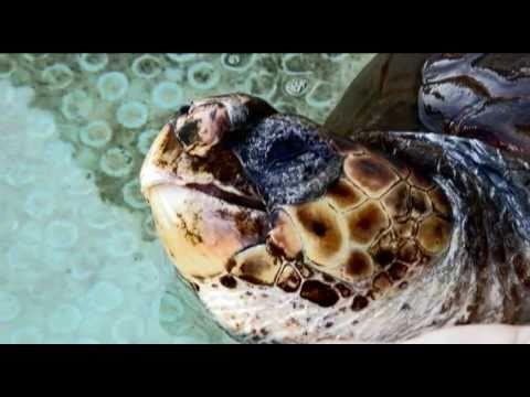 Rescuing The Mediterranean's Sea Turtles