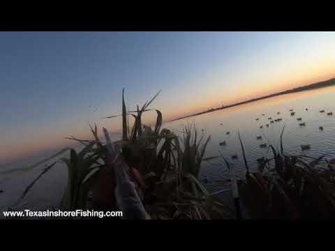 Waterfowl Duck Hunting Public Water In Galveston Texas