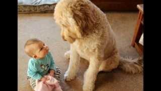 Kids&Pets. Дети и домашние животные.