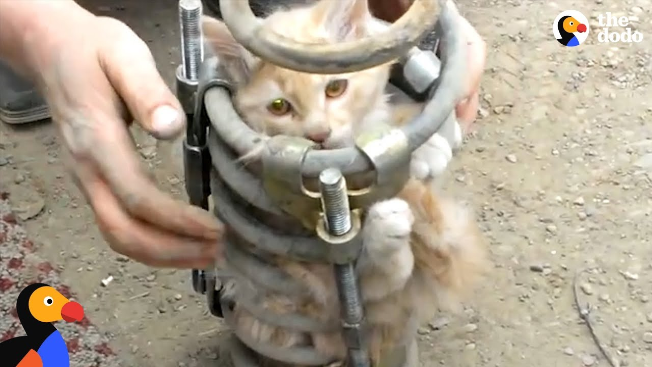 Cat Stuck In Car Coil Spring Rescued After People Hear Meows for Help