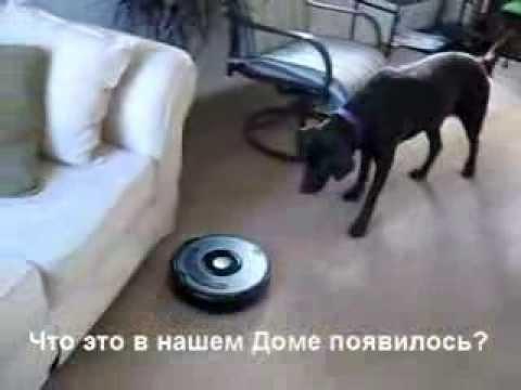 Домашний Пылесос...  и  Собака!