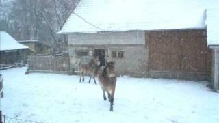 Konie w naszym gospodarstwie