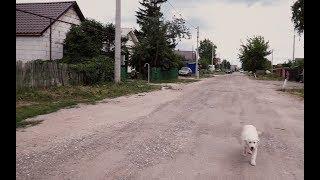 Этнический конфликт в Чемодановке: как живёт село после массовой драки и гибели человека