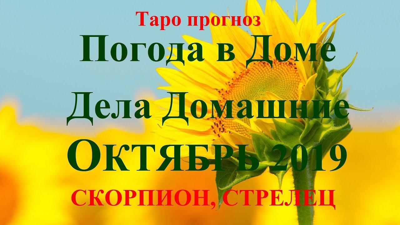 ДЕЛА Домашние – СКОРПИОН, СТРЕЛЕЦ — октябрь 2019. Прогноз Tarot.
