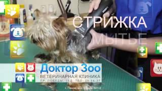 Доктор ЗОО - Ветеринарные клиники(Клиника «Доктор ЗОО» предлагает любую ветеринарную помощь вашим питомцам: - терапия, - хирургия, - вакцинаци..., 2015-03-25T10:52:26.000Z)