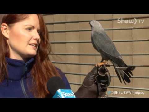 Shaw TV @ Wildlife Haven Rehab Centre: Ambassador Milan