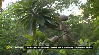 Escale en Martinique : les fruits exotiques