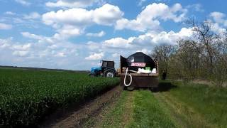 видео Удобрение пшеницы