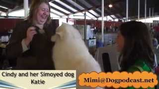 Samoyed Dog Breeder Interview at Olympic Kennel Club Dog Show
