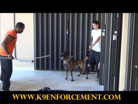 Bullet Protection Bite Work - K9 Enforcement Training Academy