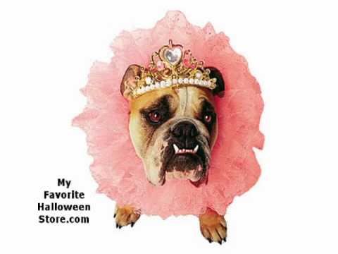 Cute Halloween Costumes for Girl Dogs - YouTube