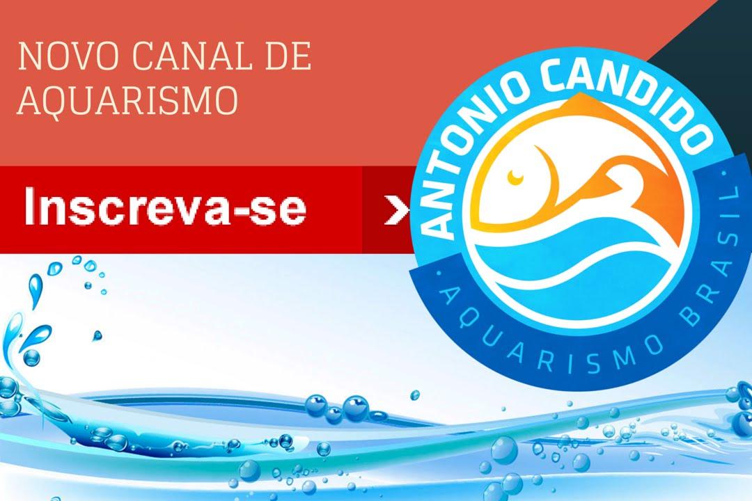 Novo Canal de Aquarismo! Antonio Candido Aquarismo Brasil