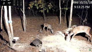 Live Deer Cam Squirrel Bird and Wildlife Cam   Live Stream   LiveDeerCam com  31 10 18