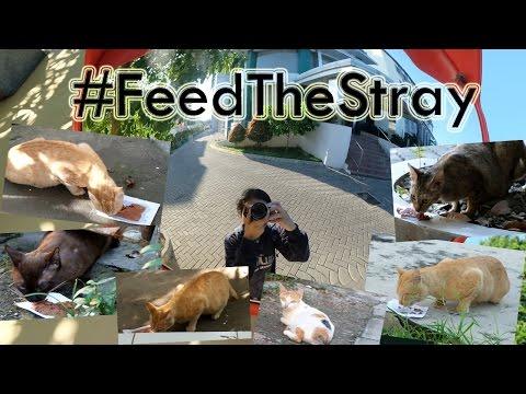#ShareHappiness - Feeding The Stray Cats at Airlangga University (Surabaya) | June, 2nd 2016