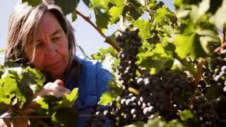 Yalumba: Steeple Vineyard Barossa Shiraz with Jane Ferrari