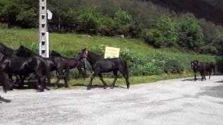 Transhumance 2009 - Camping de Mérens-les-Vals