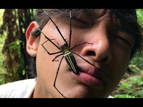 生きた巨大クモを食べたら・・・ 熱帯雨林で遭難#4