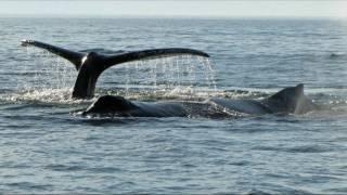 Whale Watching - Juneau, Alaska