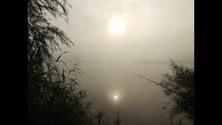 Рибалка на гарного карася в селі Лище в туманний ранок