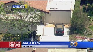 Cleaning Lady, Firefighters Hurt In Bee Attack