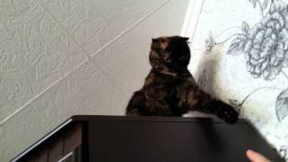 Лялька — кошка-сова