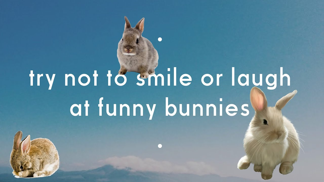 Try Not To Laugh Or Smile At Funny Bunnies Funnydog Tv