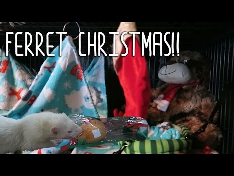 CHRISTMAS THEMED FERRET CAGE