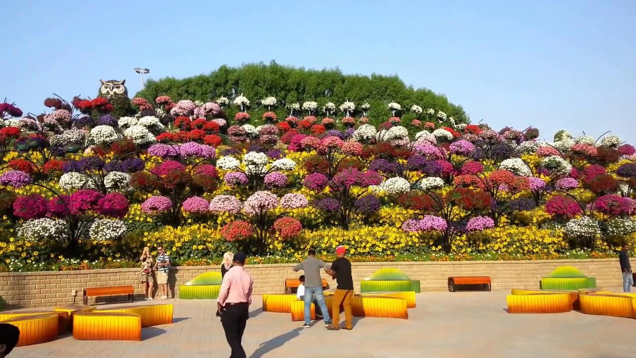 Miracle Garden Dubai - YouTube