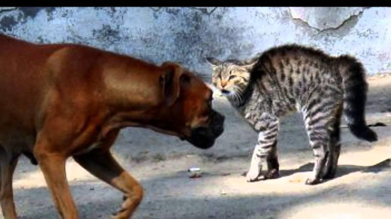Por Qué Pelean Los Perros Y Los Gatos Peleas De Perros Y Gatos Youtube