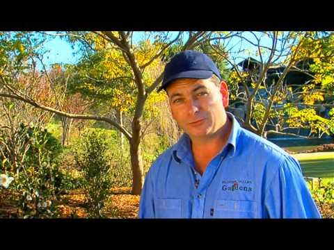 DIY Gardening Tips - Rose Pruning By Flicks - Video Production Company Sydney