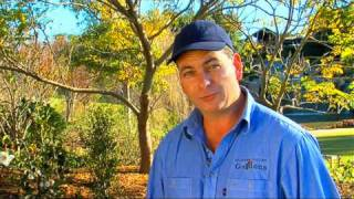 DIY Gardening Tips - Rose Pruning by Flicks - Video Production Company Sydney
