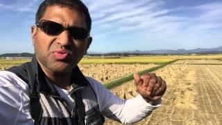 Rice Farming In Japan