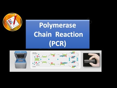 Download Basic Concepts 01 - Polymerase Chain Reaction (PCR)