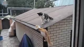 Funny Cat Jump Fails.mp4