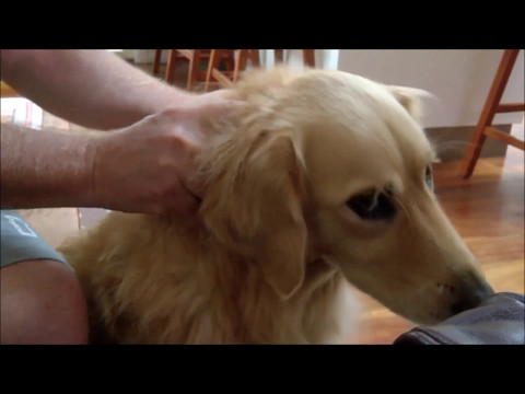 Dog getting neck massage says 'Don't stop!'