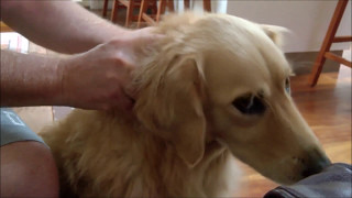 dog getting neck massage says don t stop