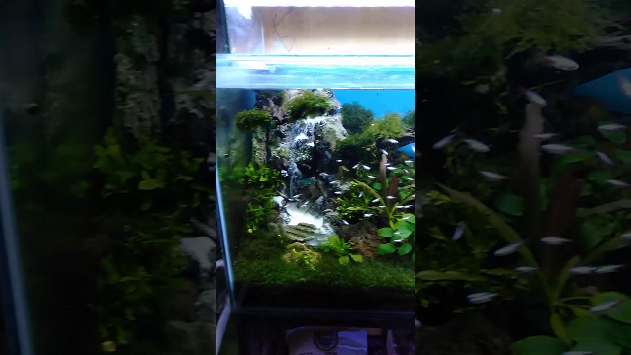 Aquascape - YouTube