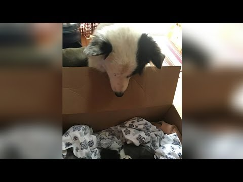 When This Rescue Dog Peered Inside A Box, His Natural Instincts Immediately Kicked In