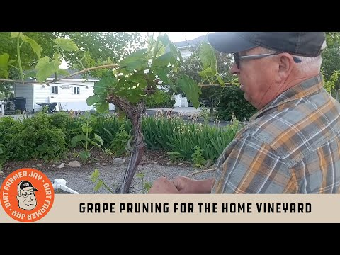 Grape Pruning for the Home Vineyard