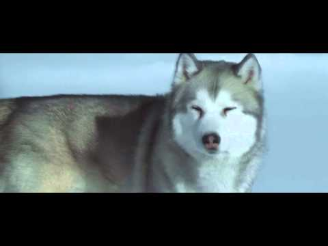 Eight below-Paul Walker (Iridescent)