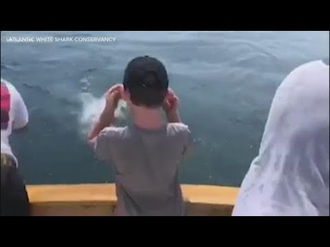 The Keith Show - A Great White Shark Steals a Kid's Catch