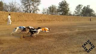 Greyhound Race:  Sir Ashar Mehfooz takes us on an adventure