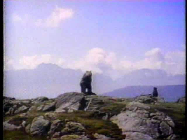 CTV Special Movie bumper The Bear 1992