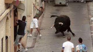 Valencia , turisti feriti dal toro alla fiesta del torico thumbnail
