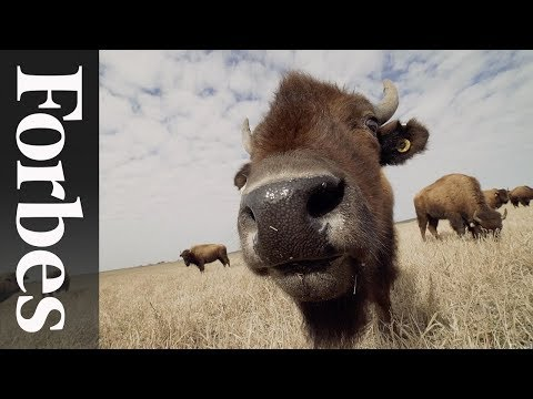 EPIC's Roam Ranch: Reintroducing Bison To Regenerate Austin'