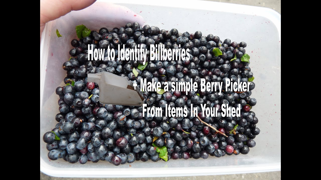 how to get blueberry stains out of leather